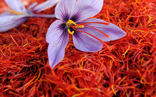 Saffron Fights Cancer and Alzheimer's Disease