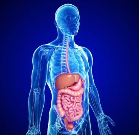gut-allergy-sensitivity-celiac-gluten-food-intolerance-minnesota