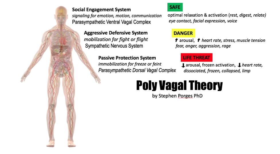 Presence-Academy-Poly-Vagal