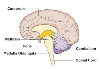 Medullaphysicalhealthmnethanwise