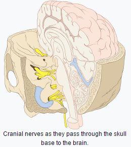 cranialnerves2