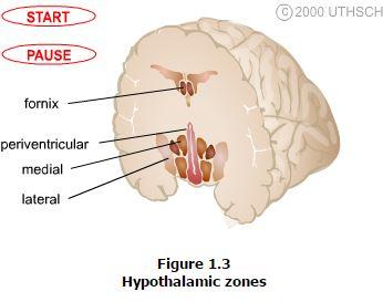 lecture-hypothalamus2