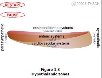lecture-hypothalamus3