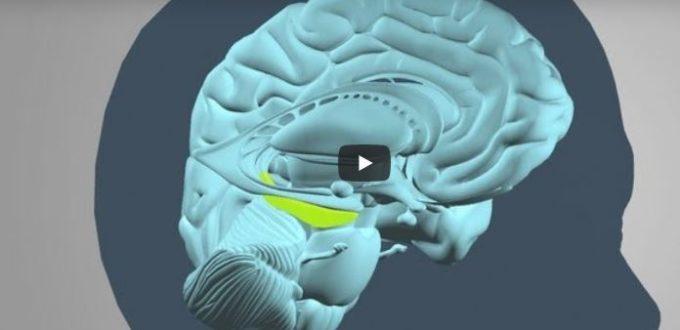 brainchangestraumaamygdala