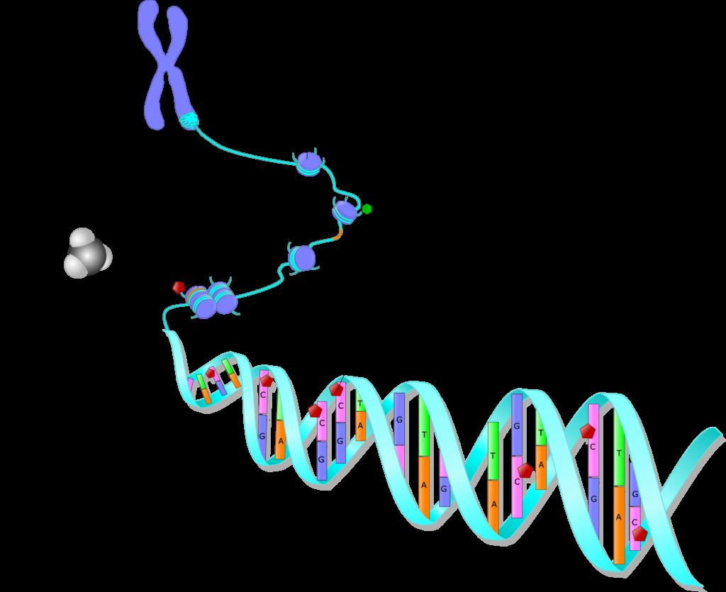 Stress & Epigenetics